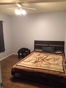 Looking for Roomate, spacious duplex