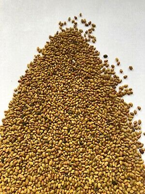 Medicago sativa. semilla de alfalfa ecologica 20g
