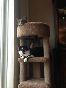 Still Missing - two cats in Chicopee area