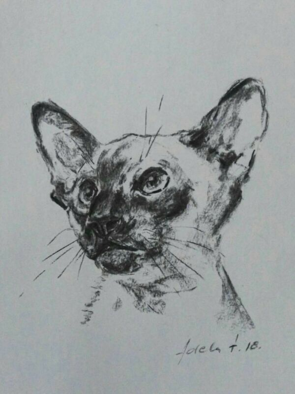 Siamese+Cat+Charcoal+Drawing+A4+Paper+Pet+Portrait+Art+Sketch+Loose+Drawing