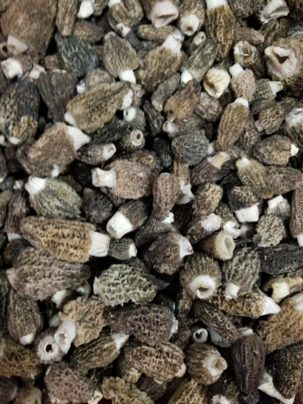 Fresh  morel mushrooms Morelmasters  morels 1 pound