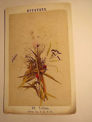 Lilium - Lilie - Pflanze / CDV