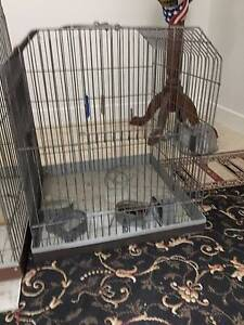 Parrot Cage Coorparoo Brisbane South East Preview