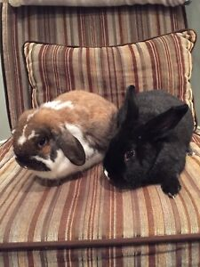 Bonded bunnies for rehoming