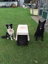Dog puppy carrier transport box crate Castlereagh Penrith Area Preview