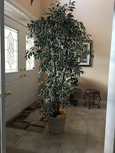 Decorative indoor tree