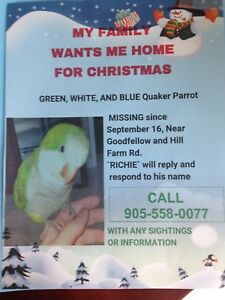 MISSING PARROT! PLEASE CONTACT!