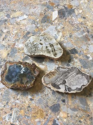 Petrified Fossil Wood Agate Small Slice , Reiki Healing,Titea Singularis