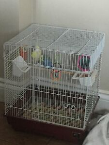Parakeet for sale with cage/accessories/food