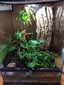 Terrarium Exo with frogs and cricket cage