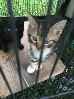 beautiful kittens Lurnea Liverpool Area Preview