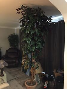 8 feet tall silk plant excellent condition
