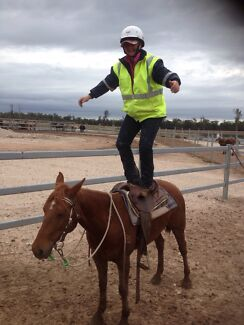 KMC Natural Horsemanship  Dalby Dalby Area Preview