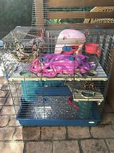 Ferret cage for sale Greta Cessnock Area Preview