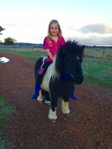 Mini pony Waterloo Dardanup Area Preview