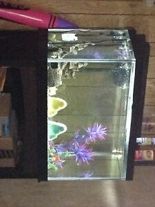 65 gal fish tank / aquarium and stand