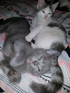 Kittens 4 sale Crestmead Logan Area Preview