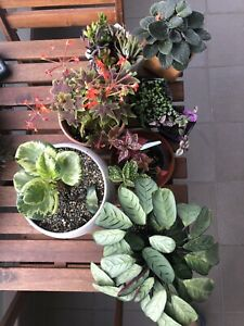 Plant bundle- String of pearls, Stromanthe triostar, peperomia + more!