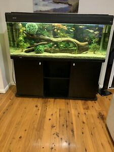 5' fish tank complete