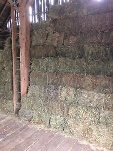 Great Quality Hay