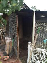 Want FREE chickens for newly cleaned empty aviery Adelaide CBD Adelaide City Preview