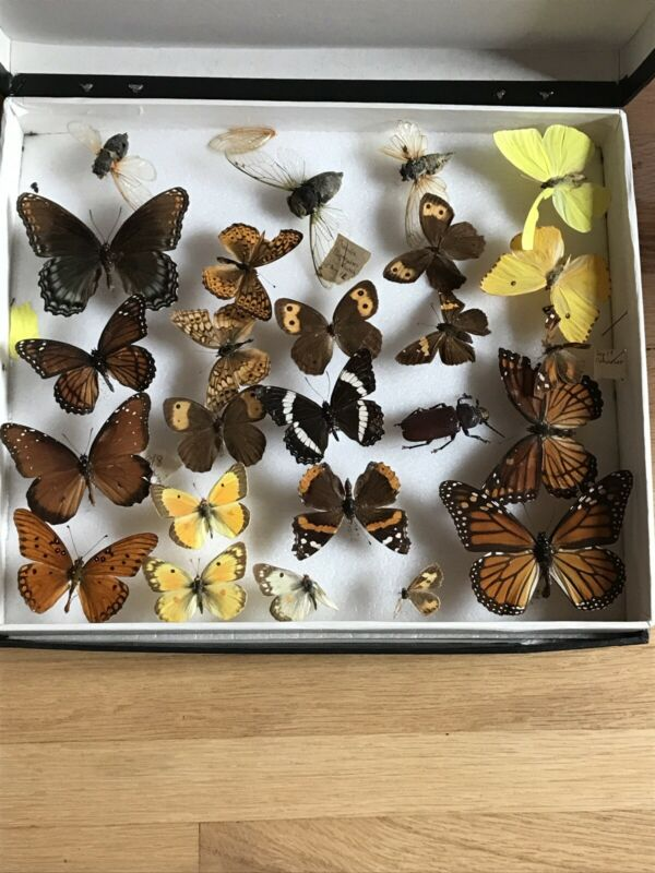 Vintage Real Butterfly Insect Collection RARE
