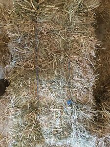 Cow hay for sale Glendon Singleton Area Preview