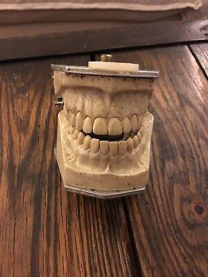 Vintage 1972 Columbia Dentoform Typodont - Dental Manikin Teeth Dental Shroud