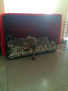 42 INCH METAL DOG CRATE Canning Vale Canning Area Preview