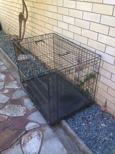 Heavy duty dog crate cage transporter pet Mermaid Beach Gold Coast City Preview