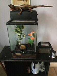 Crested gecko & COMPLETE setup