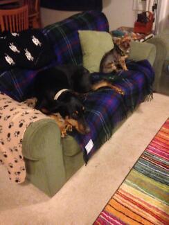 Home Comforts Petsitting