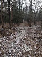 Bûcheron, terres à bois, scie à chaîne