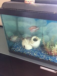 30 gallon fish tank with all decor and fish