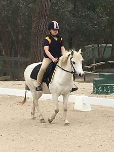 GREAT LITTLE PONY FOR SALE Panton Hill Nillumbik Area Preview