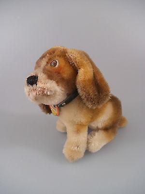 Steiff Hund Basset 3312,00 - komplett mit KFS - 60er Jahre