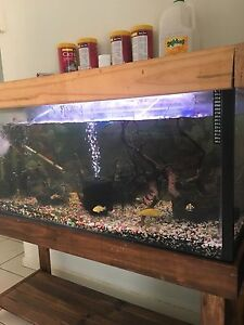 4ft compleat set up, with fish and extras. Caboolture South Caboolture Area Preview