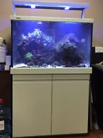 Looking for:Salt water fish tank servicing