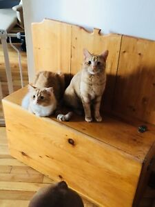 2 male cats to give