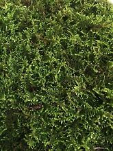 Moss varieties Pakenham Cardinia Area Preview