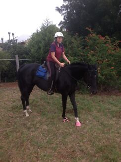Black Thoroughbred Cabarlah Toowoomba Surrounds Preview