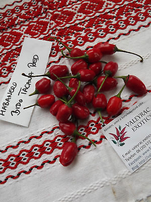 Used, Habanero Bido Tacana Red Chili - 10+ seeds - RICH RARITY! for sale  Shipping to Canada