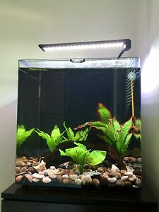 Fish tank aquarium Aqua one nano 40 55L stand angelfish tropical Perth Perth City Area Preview
