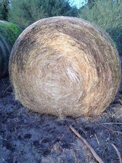 Grass hey Dereel Golden Plains Preview
