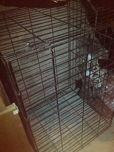 Big dog cage for sale