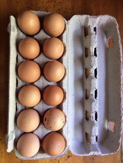 1 dozen fertile barnevelder eggs