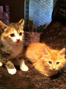 2 kitties need forever homes