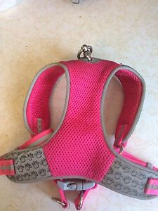 Pup harness