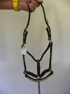 Yearling show halter  with lead
