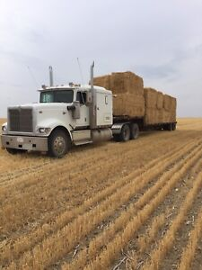 Large square straw bales for sale located in Hays AB